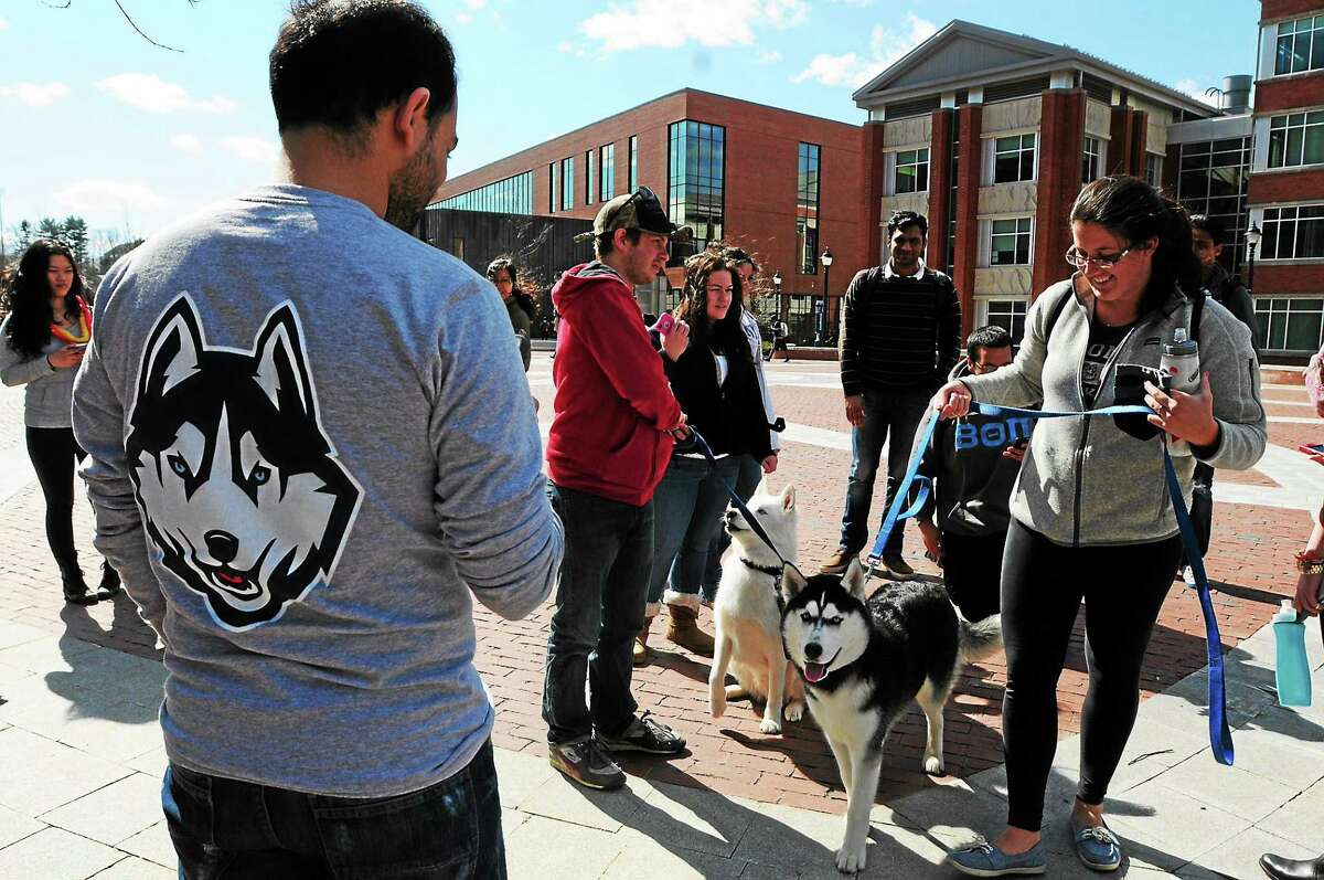 UConn students admire husky dogs on campus as they wait for the women's basketball team to arrive. Peter Hvizdak - New Haven Register