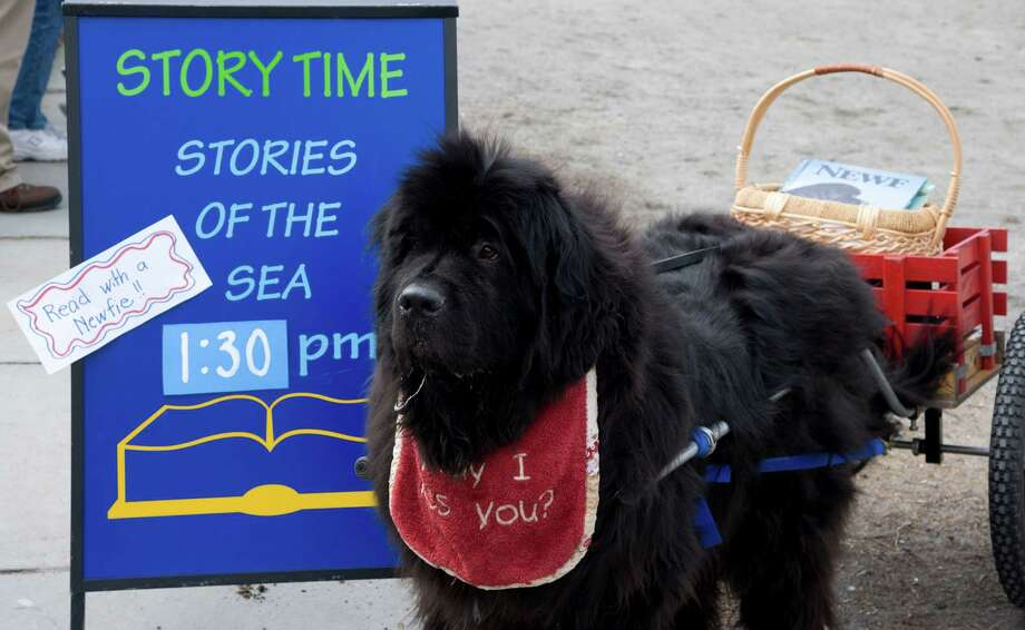 Newfoundland work dogs will be at Mystic Seaport Sunday. Free admission for kids continues through Feb. 23. Photo: Mystic Seaport   / Mystic Seaport