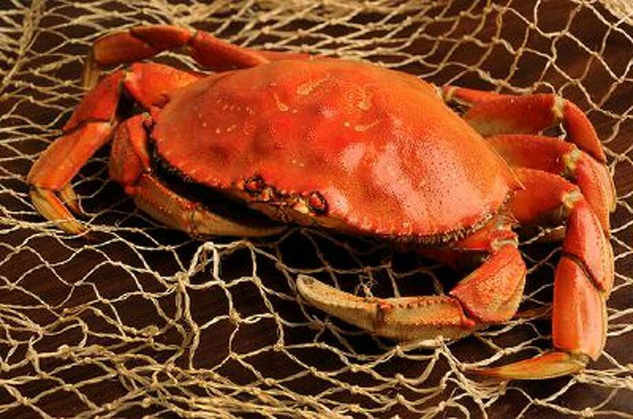 Dungeness crab, photographed in Walnut Creek, Calif., on Tuesday, Jan. 28, 2014. Photo: Bay Area News Group / Bay Area News Group