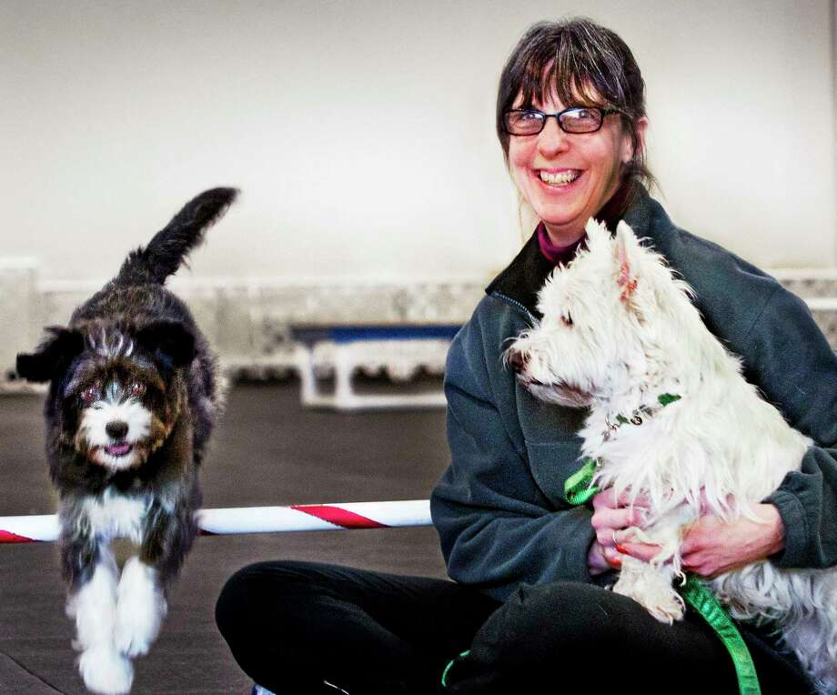 (Melanie Stengel ó New Haven Register)     Lisa Tibbans, with her dogs Sadie (L), and Castle at Paws & Effect.  Sadie, a mixed breed, will be competing in the first Masters Agility at Westminster.  This event brings non-purebred dogs to Westminster for the first time  since the earliest days of the show2/4.  Castle is a West Highland White Terrier. Photo: Journal Register Co.