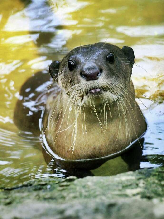 www.photos.com  Otter Photo: Getty Images/iStockphoto / iStockphoto