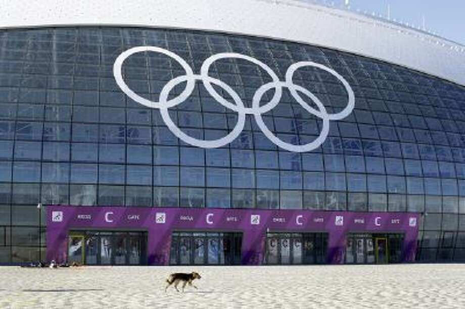 A stray dog walks outside the Ice Dome venue as preparations take place for the 2014 Winter Olympics Monday, Feb. 3, 2014, in Sochi, Russia.