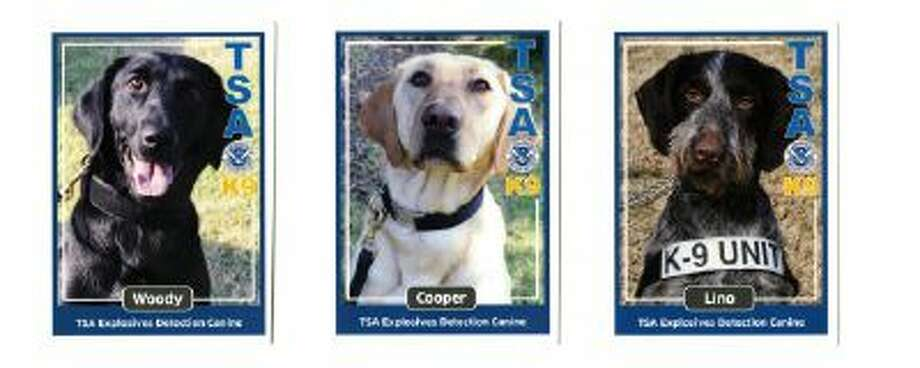 Shown are trading cards for some of the TSA dogs. Left: Woody, a black labrador retriever. Middle: Cooper, a yellow labrador retriever. Right: Lino, a German wirehaired pointer.