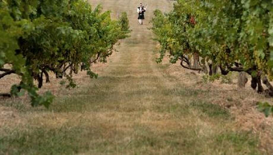 "Bagpiper Robert Mitchell plays as he approaches a vineyard at the beginning of the ""Blessing of the Grapes"" ceremony at the Philip Carter family winery in Hume, Virginia, on August 13, 2011. Photo: AFP/Getty Images / 2011 AFP"