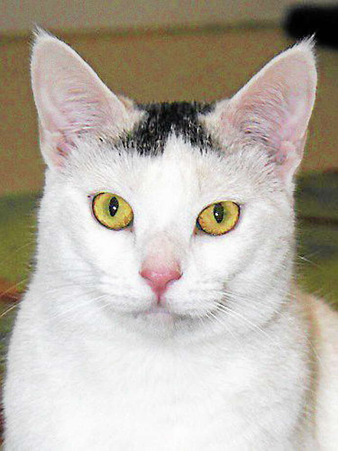 This is Alice, a sweet adult. looking for a home. Photo: BCC