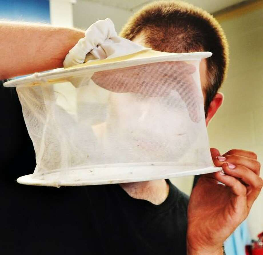 Research assistant,  Joshua Dickman,  checks the last few mosquitos caught in his trap 7/10, before removing them at the Connecticut Agricultural Station in New Haven. Melanie Stengel/New Haven Register