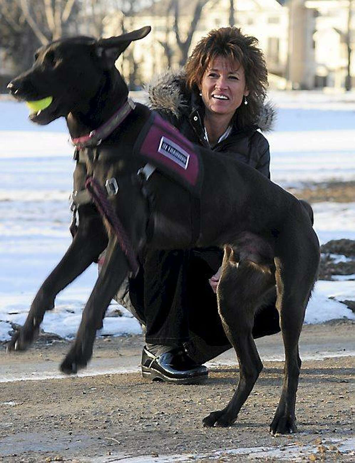 Holly Ryan took Ranger, a therapy dog with her to help counsel first responders at the Newtown, Connecticut school schooting, photographed in Savage, Mn. on January 15, 2013. (Pioneer Press: Scott Takushi)