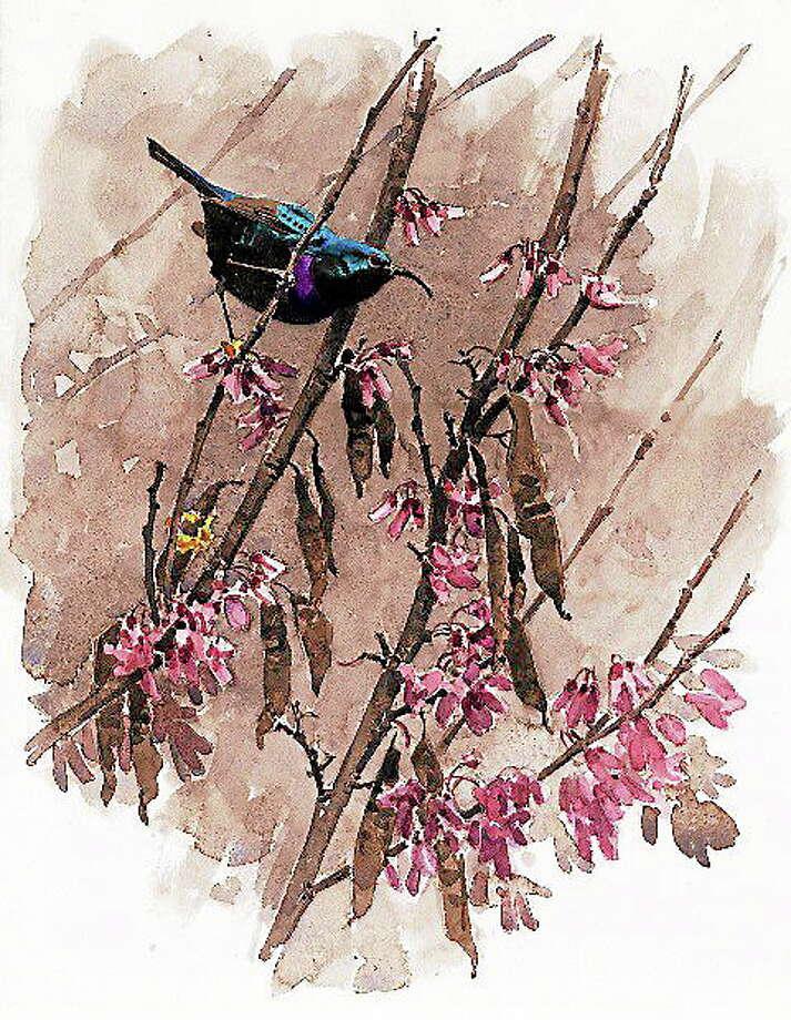 Palestine sunbird Photo: Journal Register Co.