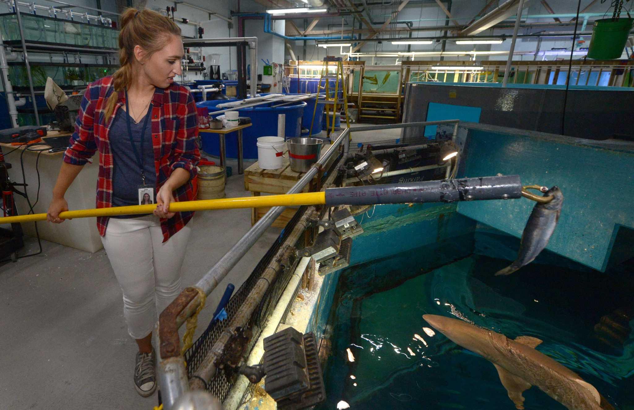 With Public Shark Feedings Maritime Aquarium Shows A