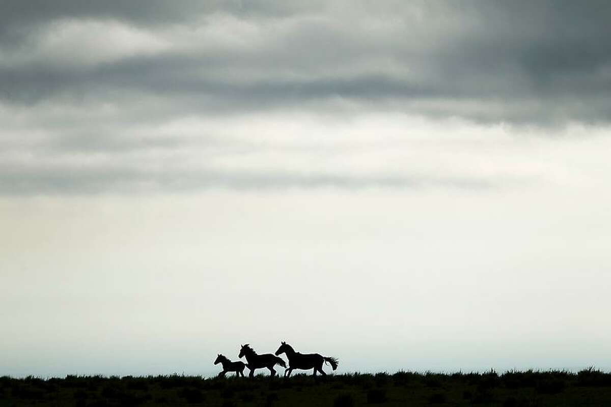 Horses in a field gallop away from the sound of motorcycles competing in the 9th stage of the 2013 Dakar Rally from Tucuman to Cordoba, Argentina, Monday, Jan. 14, 2013. The race finishes in Santiago, Chile, on Jan. 20. (AP Photo/Victor R. Caivano)
