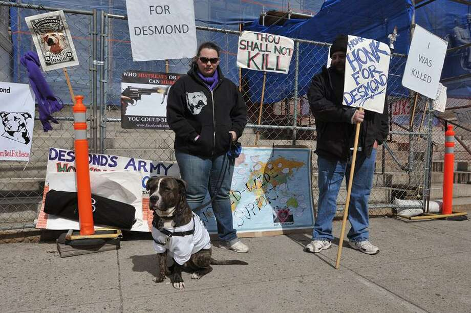 "New Haven-- Stephanie Buchanan and her Pit Bull mix, ""Goliath,"" along with another protester who would not give his name stand outside the court on Elm Street. The two were protesting as Alex Wullaert was inside appearing in court for killing his dog.  Photo-Peter Casolino"