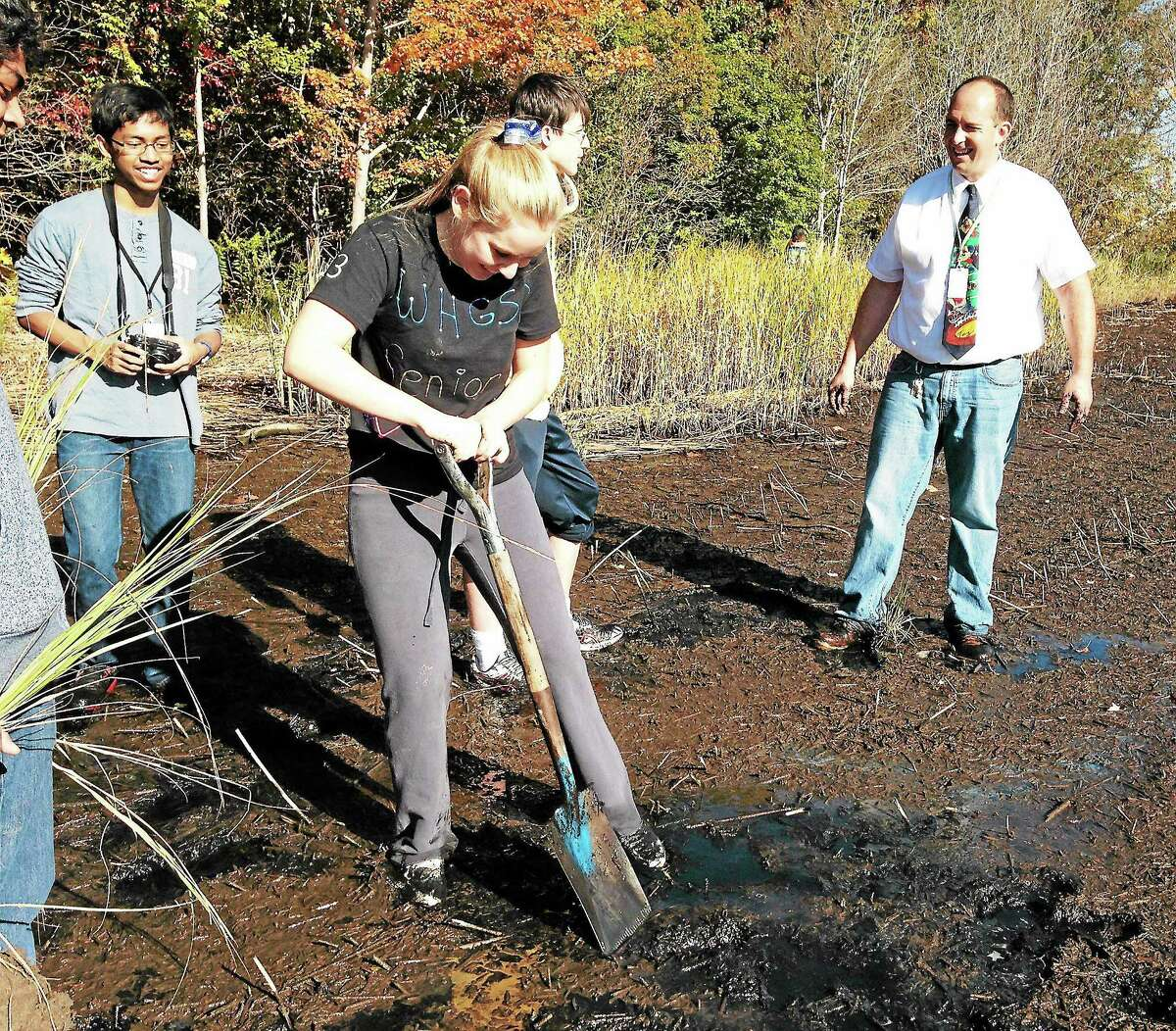 A West Haven High School advanced placement biology student digs a hole for a marsh grass plant in a marsh near the Cove River. The students will be monitoring restoration of the marsh throughout the year.
