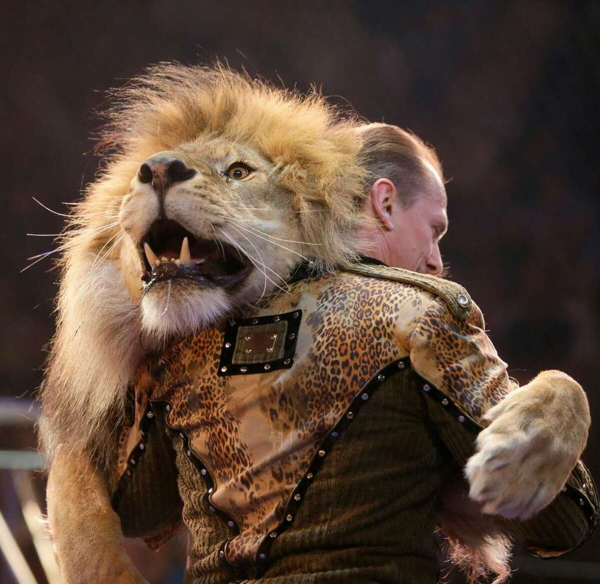 Oleksiy Pinko, a circus artist, dances with a lion during presentation of the new program in Ukraine's National Circus in Kiev, Ukraine, Wednesday, May 15, 2013. (AP Photo/Efrem Lukatsky)