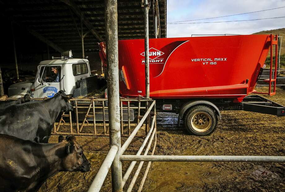 Assistant manager Josh Hollis uses an electric truck that runs on methane to feed the cows at the Straus dairy farm in Marin County. Photo: Gabrielle Lurie / Photos By Gabrielle Lurie / The Chronicle / ONLINE_YES