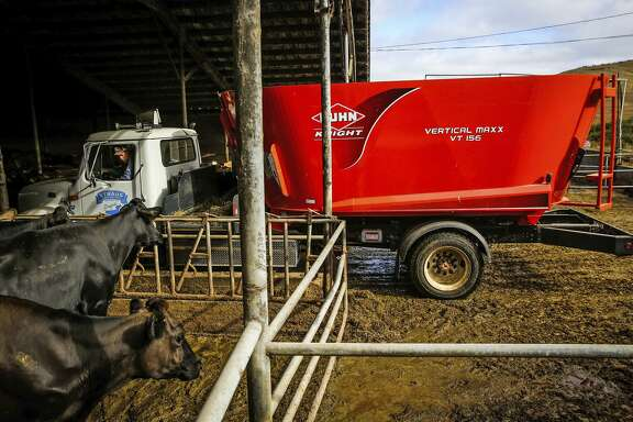 Assistant manager Josh Hollis uses an electric truck that runs on methane to feed the cows at the Straus dairy farm in Marin County.