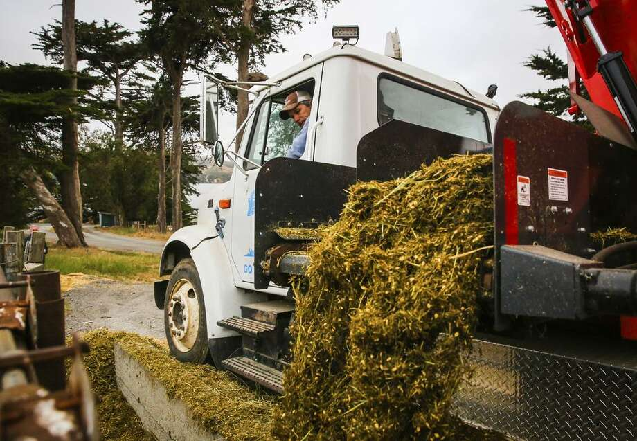 Assistant manager Josh Hollis uses an electric truck that runs on methane to feed the cows at the Straus Ranch in Marin County. Photo: Gabrielle Lurie / Gabrielle Lurie / The Chronicle / ONLINE_YES