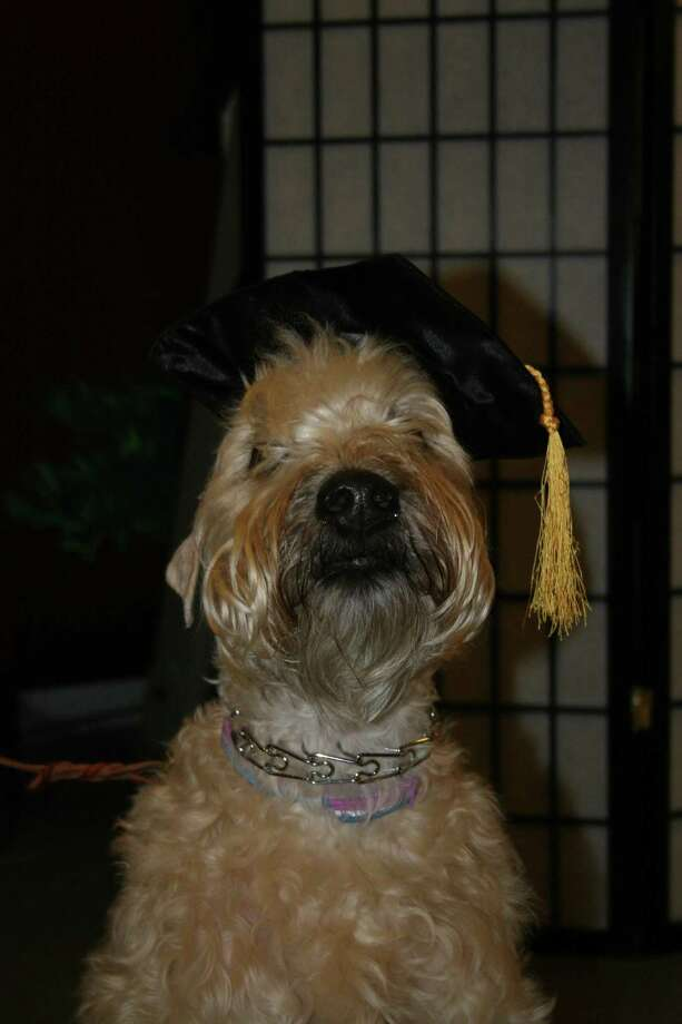 Submitted photo A past graduate of Torrington's Bow Wow University.