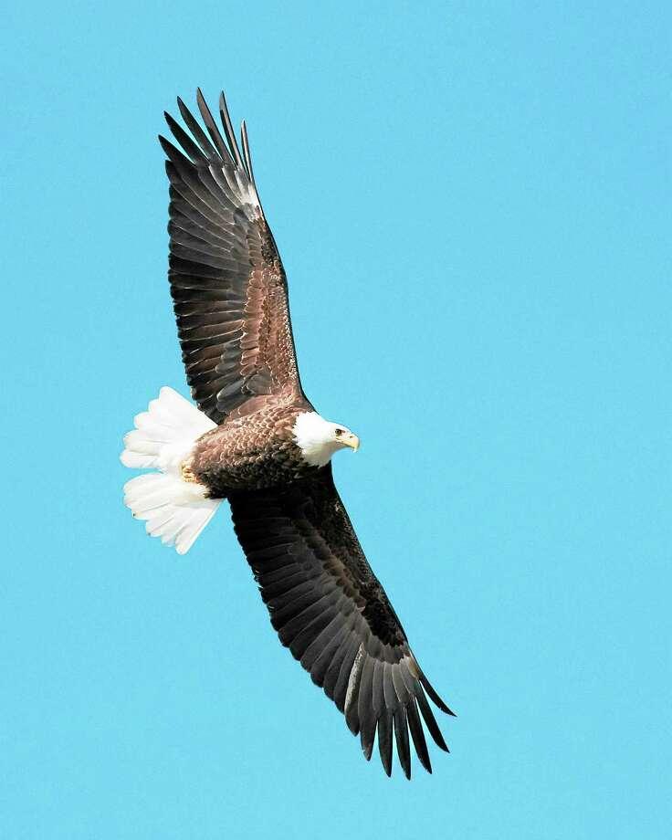 photos.comBald eagle Photo: Getty Images/iStockphoto / iStockphoto