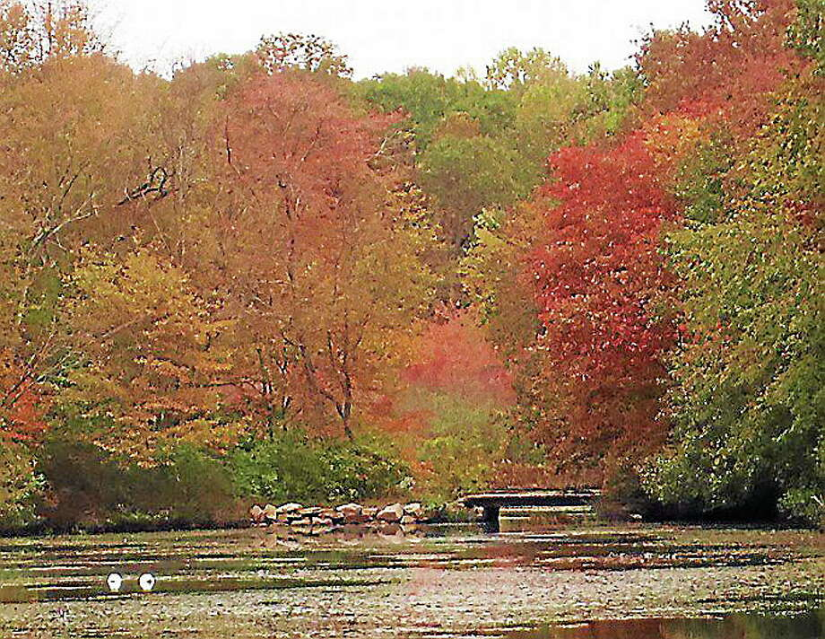 Get a closer look at the foliage at Young's Pond in Branford. Photo: Truman Sherk