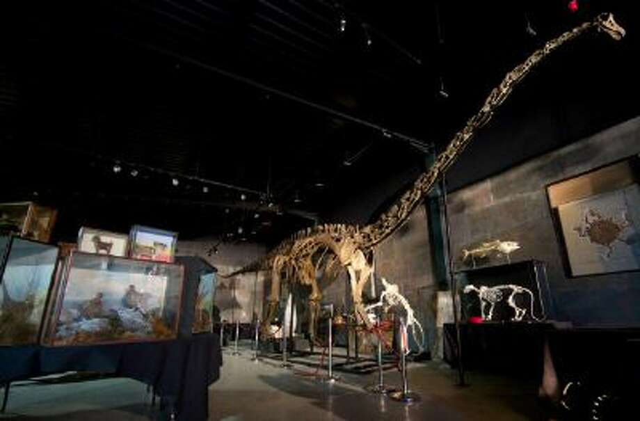 In this file photo taken on Nov. 19, 2013, the skeleton of a diplodocus longus, one of the most iconic dinosaurs and one of the largest animals to have walked on earth, is displayed at Summers Place Auctions in West Sussex, England . Photo: AFP/Getty Images / 2013 AFP