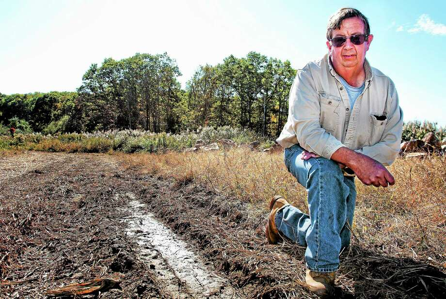 Melanie Stengel — New Haven Register    Jay Medlyn shows an area of his farm that used to yield corn. Salt water flooding destroyed the crop and made the soil unsuitable for replanting. Photo: Journal Register Co.