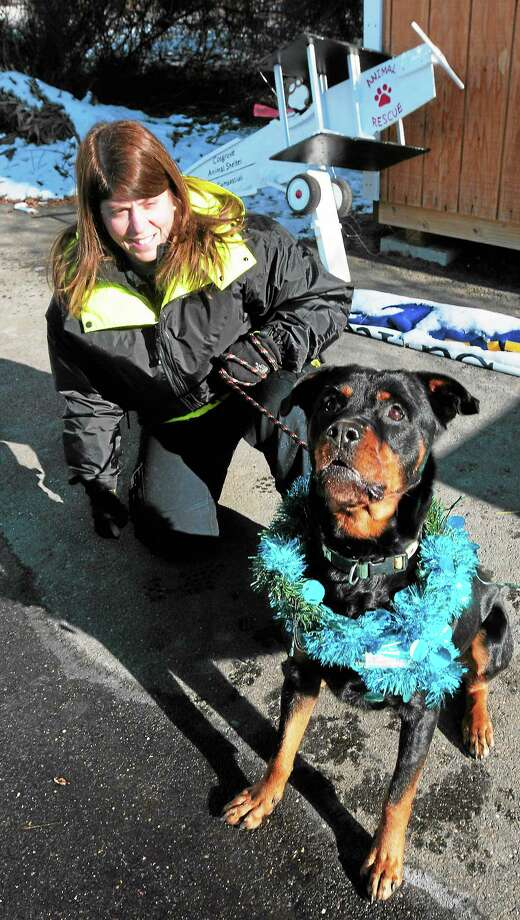 Roxy, a 3-year-old Rottweiler, with Animal Control Officer Pam Medlyn at the Dan Cosgrove Animal Shelter in Branford Thursday. Photo: Peter Hvizdak — New Haven Register   / ©Peter Hvizdak /  New Haven Register