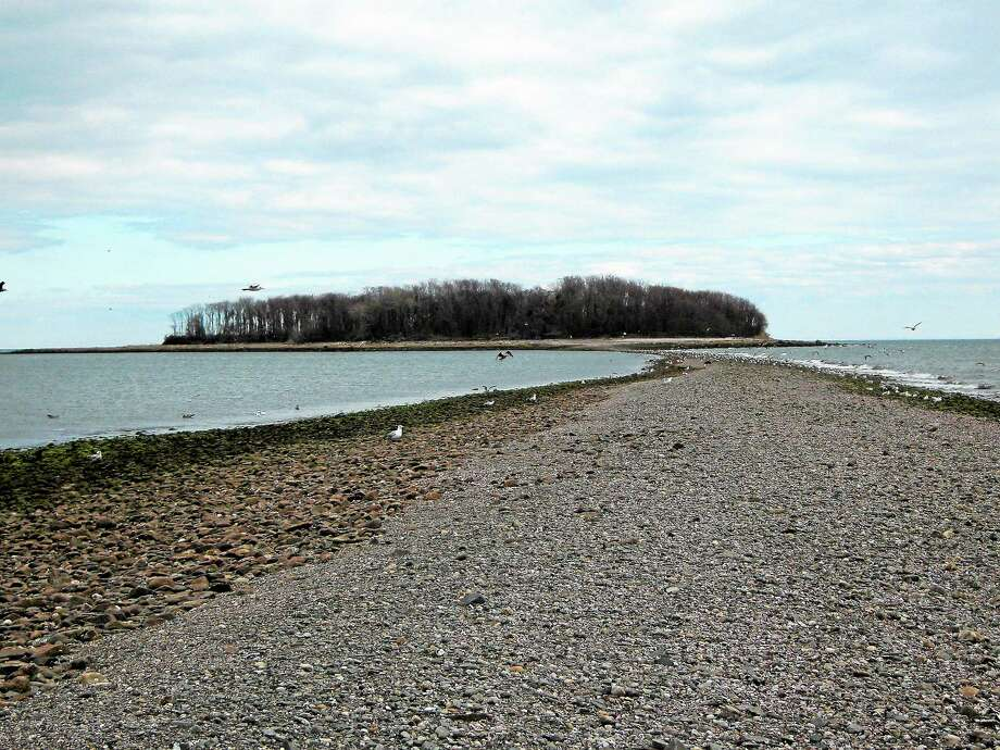 Connecticut Audubon leads a guided walk out to Charles Island off Milford Saturday. Photo: Vanessa Mickan