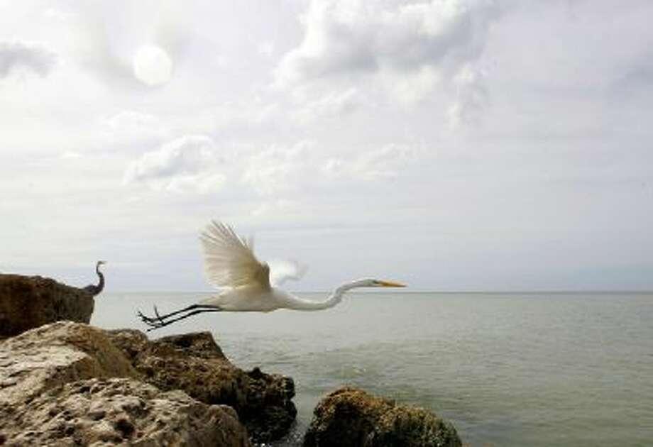 A bird flys off a rock on Sanibel Island, Florida.