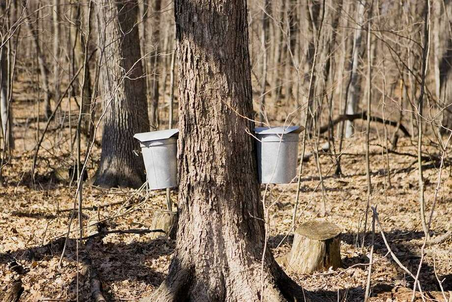 John Roquet/National Park Service photo: The cusp of spring means maple tapping time.