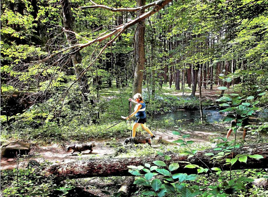 Stephanie Cabral, of West Haven, walks her dogs, Morgan and Misha, past a fallen tree with a hanging branch at Sleeping Giant State Park Friday. Photo: Melanie Stengel — Register