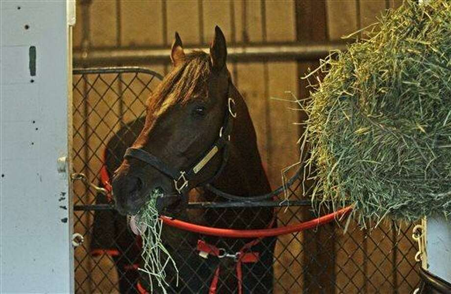 Kentucky Derby winner Orb munches on hay in his stall in Barn 41 at Churchill Downs, Sunday, May 5, 2013, in Louisville, Ky. (AP Photo/Garry Jones) Photo: AP / FR50389 AP