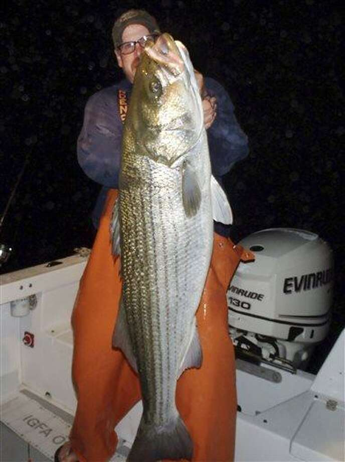 In this 2012 photo provided by Greg Myerson shows Myerson, of North Branford, with one of the record  striped bass he caught off the Connecticut coast. Myerson consistently catches striped bass 50 pounds and much larger by methodically studying his prey and developing devices to lure the fish to him.  AP Photo/Greg Myerson Photo: AP / Greg Myerson