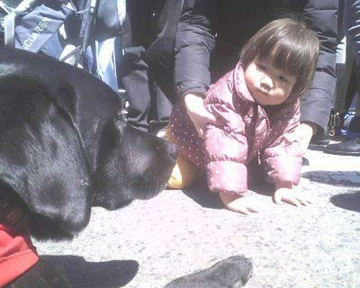 Trudy , a therapy dog owned by Jeff McDonald, of Tewksbury, Mass., was making friends Sunday afternoon at the memorial on the corner of Boylston and Berkeley streets