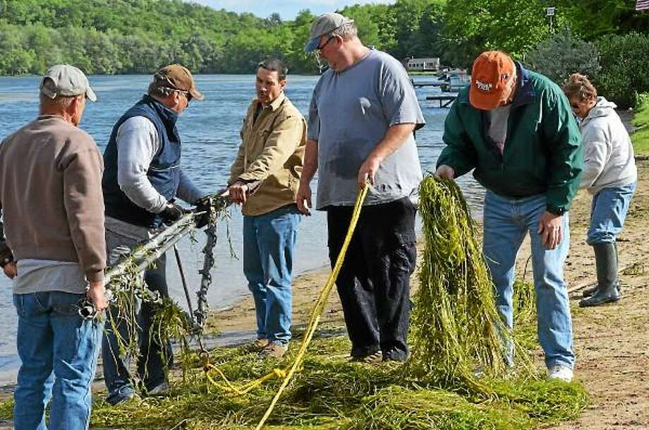 Photo by Amy Portuniki - Volunteers help remove invasive weeds from Lake Beseck beach area last month in Middlefield.