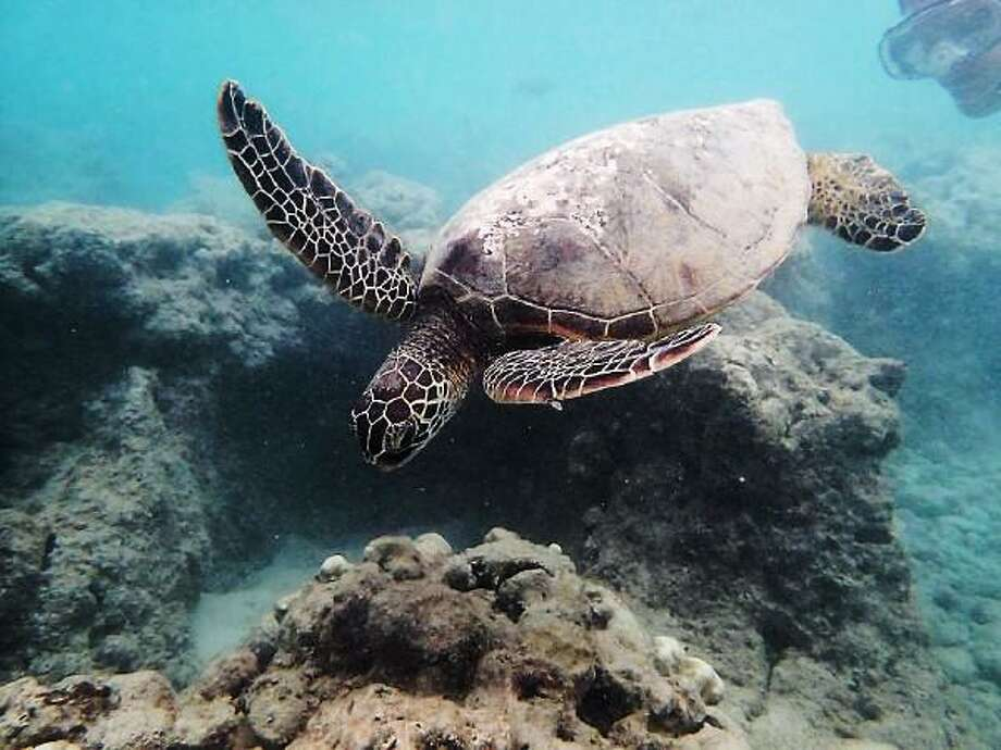 Yale researcher sheds light on the origin of turtles
