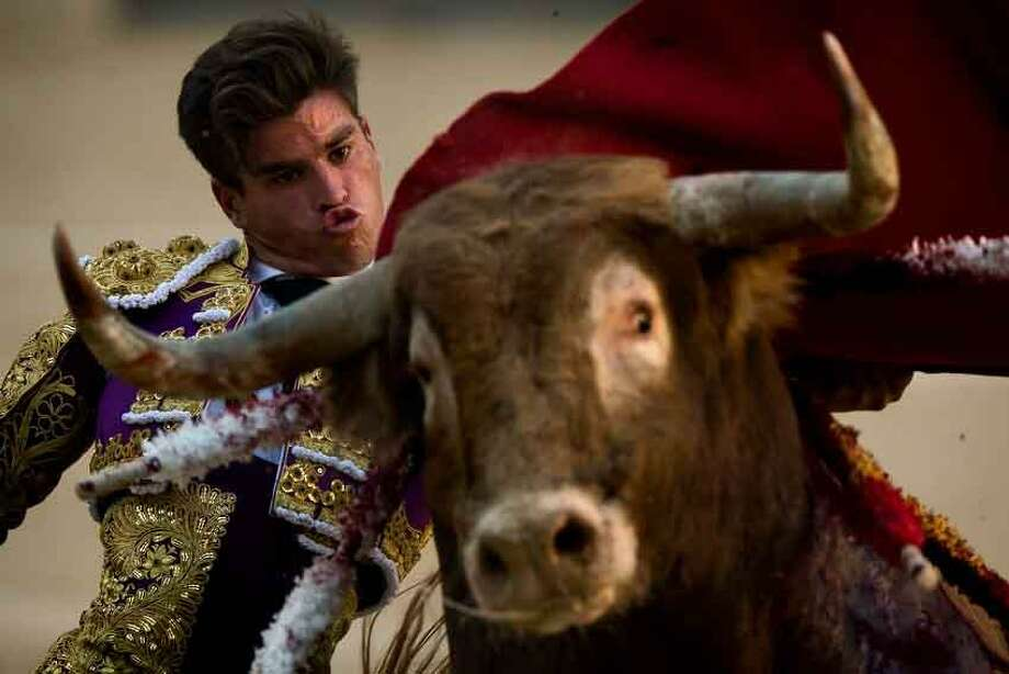 Spanish bullfighter Ruben Pinar performs with a bull during a bullfight at Las Ventas bullring in Madrid, Sunday, June 16, 2013. Bullfighting is an ancient tradition in Spain and the season runs from March to October. (AP Photo/Daniel Ochoa de Olza) Photo: ASSOCIATED PRESS / AP2013