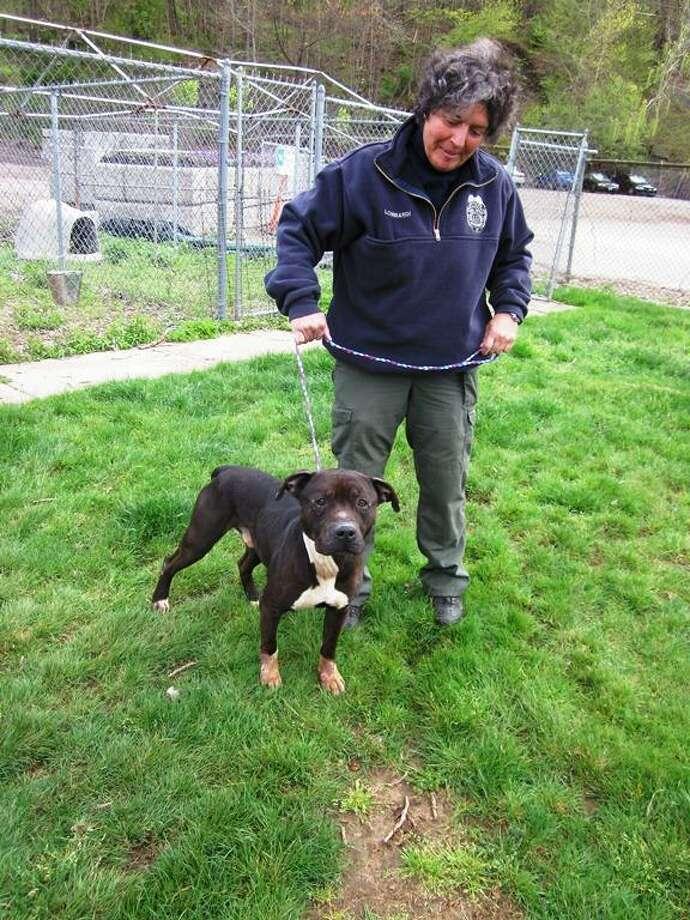 Woodbridge Animal Control officer Karen Lombardi and Oliver. Bridget Albert/Register