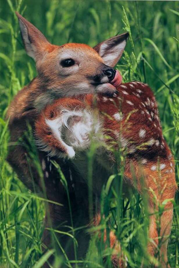 """""""Look What Came into my Yard,"""" Photograph, Artist Illya Shoykhet, United Radio"""