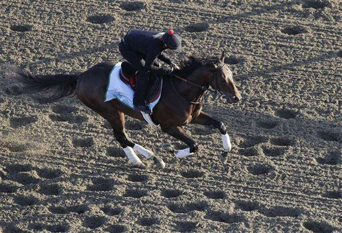 Kentucky Derby winner Orb gallops on the track during a morning workout at Belmont Park, Wednesday, June 5, 2013 in Elmont, N.Y. Orb is entered in Saturday's Belmont Stakes horse race. (AP Photo/Mark Lennihan)