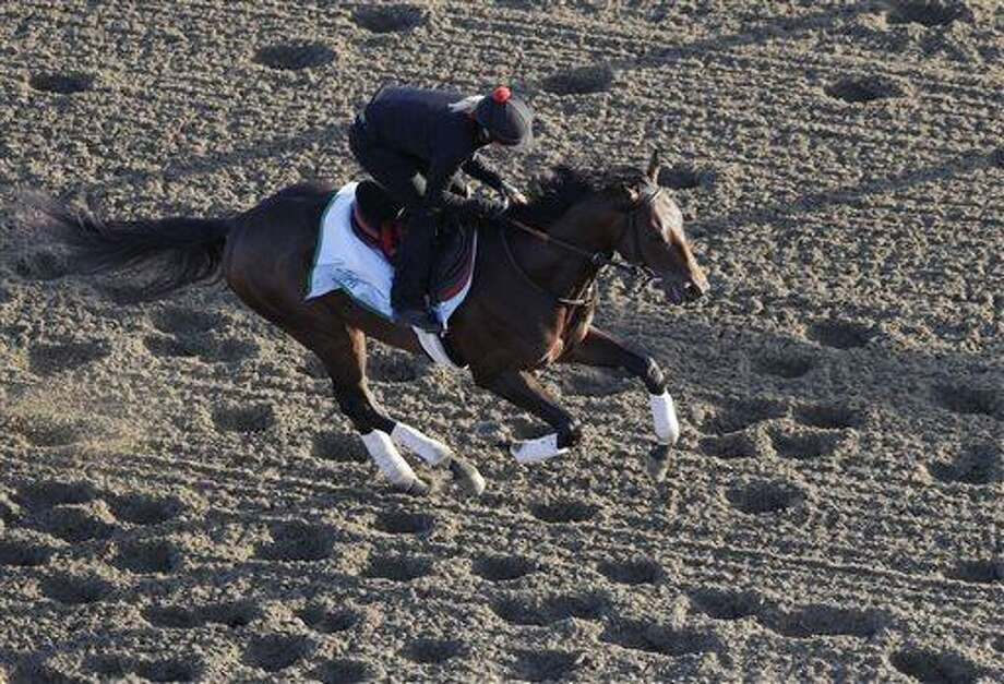 Kentucky Derby winner Orb gallops on the track during a morning workout at Belmont Park, Wednesday, June 5, 2013 in Elmont, N.Y. Orb is entered in Saturday's Belmont Stakes horse race. (AP Photo/Mark Lennihan) Photo: AP / AP