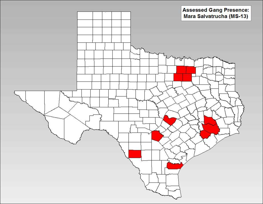 This map from the Texas Gang Threat Assessment shows where the MS-13 criminal group is most prevalent in Texas. Photo: File/Texas Department Of Public Safety