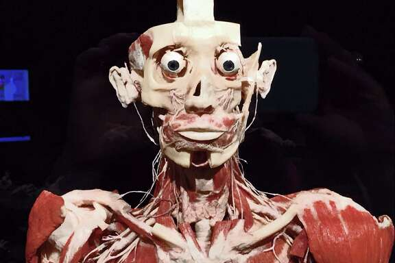 """A detail of """"Standing Man,"""" one of the plastinated humans in the recent """"Body Worlds Rx"""" show at the Health Museum."""