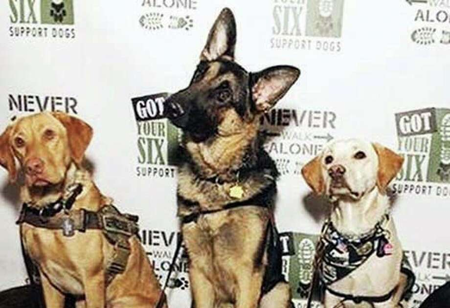 Three canines from Got Your Six Support Dogs. Photo: For The Intelligencer