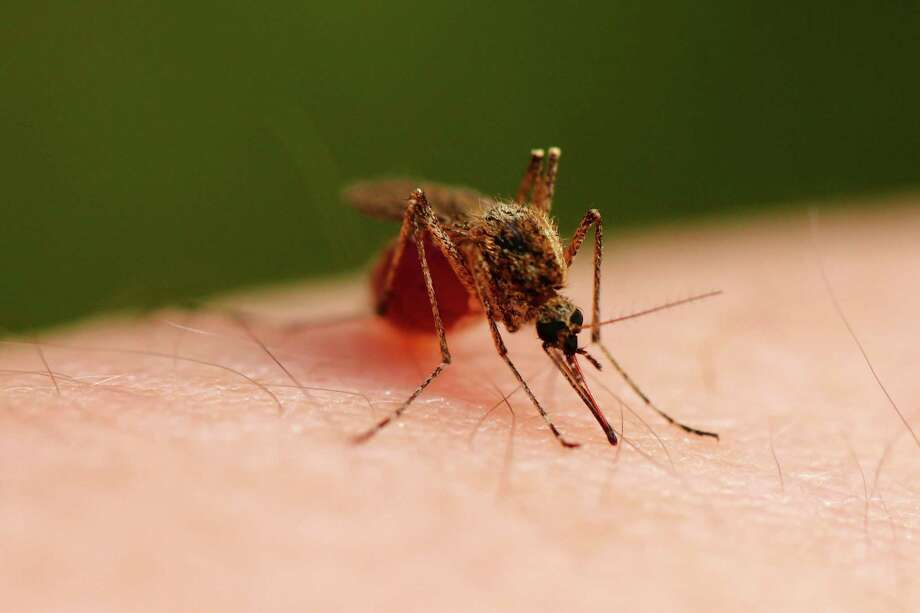 According to the CDC, common symptoms of the Zika virus include fever, rash, headache, joint pain, red eyes and muscle pain. Photo: Handout,  HO / TNS / Dreamstime