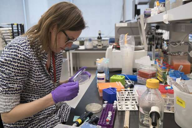 "In this Tuesday, April 25, 2017 photo, post doctoral fellow Leslie Mitchell, works at her bench at a New York University lab in the Alexandria Center for Life Sciences in New York, where researchers are attempting to create completely man-made, custom-built DNA. Mitchell says it took her a couple months to build her chromosome but longer to debug. ""The tiniest change in the code can have dramatic effect on growth,� she said. �We are learning new rules about how cells operate by building from scratch."" (AP Photo/Mary Altaffer)"