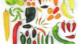 A selection of chiles found in San Antonio-area grocery stores and farmers markets.