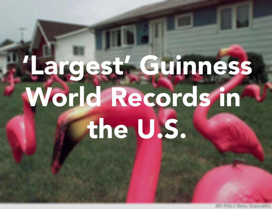 flamingos Photo: .