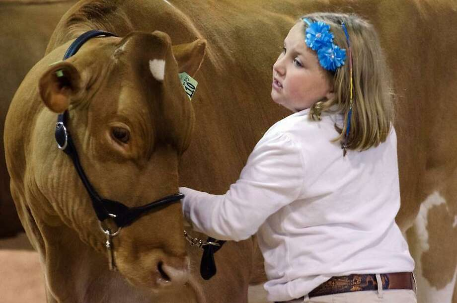 """Emily Myers, 6, shows her Reserved Grand Champion Guernsey """"Grumpy"""", Saturday at the 2012 Durham Fair. VM Williams/Register"""