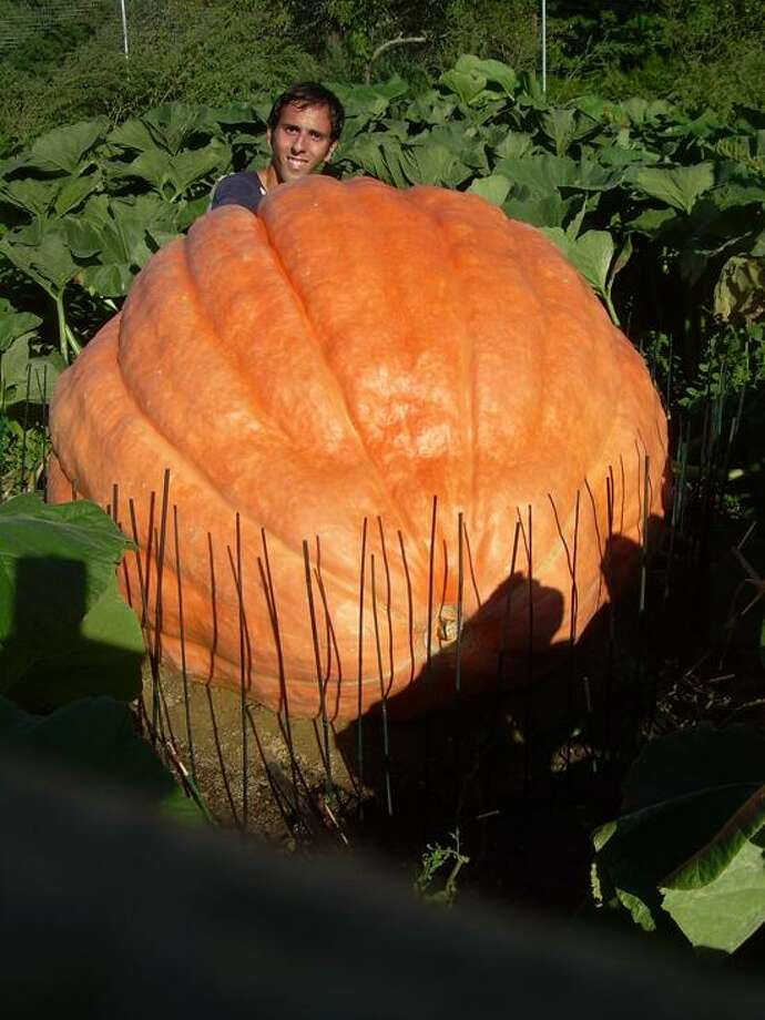 Contributed: Matt DeBacco's 873-pound pumpkin was used at a charity display on New York's Fifth Avenue. / Copyright 2006