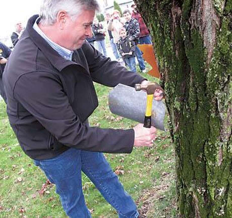 """Dispatch Staff Photo by JOHN HAEGER <a href=""""http://twitter.com/oneidaphoto"""">twitter.com/oneidaphoto</a> DARREL J. AUBERTINE New York State Agriculture Commissioner untapps a maple tree during the VVS annual Maple Weekend on Sunday , March 25,  2012 in Verona."""